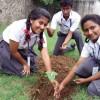 mytree-project-chennai-tamil-nadu-2