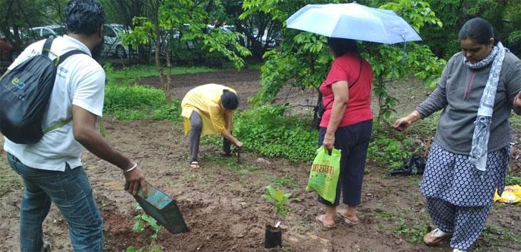Tree-plantation-6